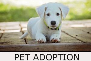 Pet Adoption Button